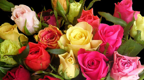букетик роз фото